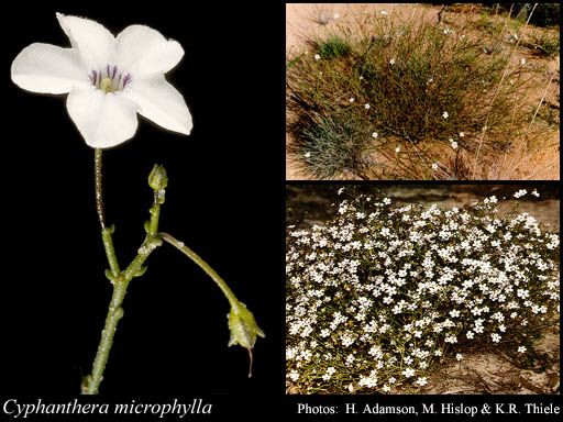 Recently added species to the Herbarium
