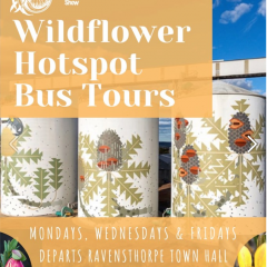 Ravensthorpe Wildflower Show Hot Spot Tours